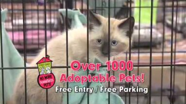 Doc Tony and First Coast No More Homeless Pets